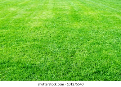 Clean empty football grass field