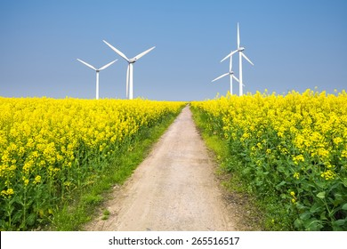 clean energy in the spring, beautiful rape flowers were yellowing the fields with wind farm