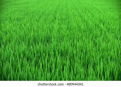 Clean grass
