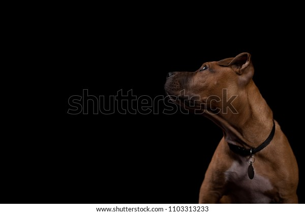 Clean Puppy/dog profile