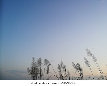 Clean sky background with blue and yellow shading over silhouette grasses