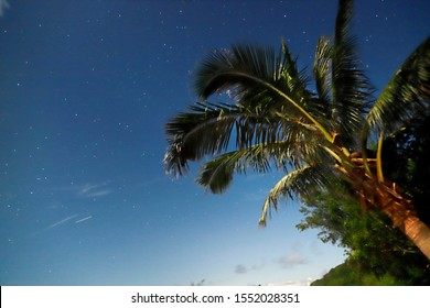 """A clean starry sky with swaying coconut trees. A windy day in small island called""""Green Island"""", which is a famous tour attraction in Taiwan."""