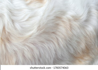 Clean white fur texture using abstract background wallpaper design