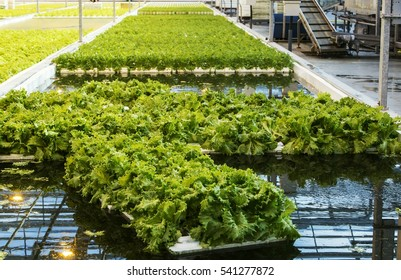 Cleaner production of vegetables.