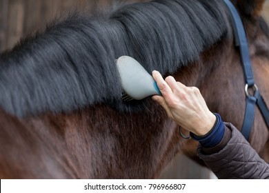 cleaning the black mane of a brown horse