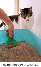 Cleaning cat litter box. Hand is cleaning of cat litter box with green spatula. Man hand and cat litter box. A cat looking at her own poop in the blue litter box.