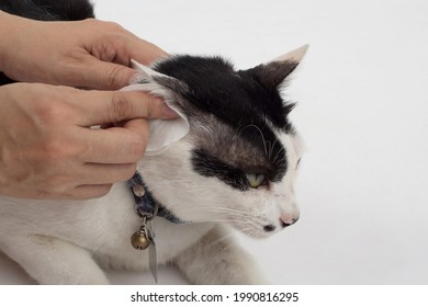 Cleaning the cats ears with ear wipes, help relieve itching and reduce odors. Pet health care concept