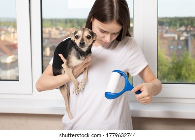 Cleaning clothes from dog hair. The problem with the coat. A girl with a dog in her hands holds a sticky roller, rolls it on a T-shirt.