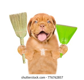 Cleaning concept. Dog holds broom and scoop in paws. isolated on white background
