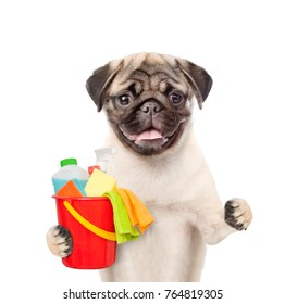 Cleaning concept. Dog holds bucket with washing fluids and rags in paw. isolated on white background