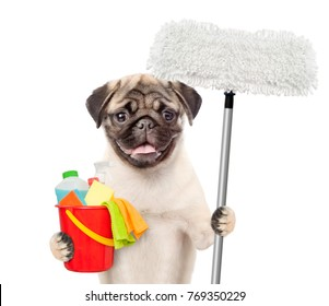 Cleaning concept. Dog holds bucket with washing fluids and mop in paws. isolated on white background