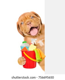 Cleaning concept. Puppy above white banner holds bucket with  washing fluids and rags in paws. isolated on white background