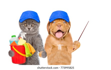 Cleaning concept. Puppy and kitten in blue hats holds bucket with washing fluids and rags in paws and pointing away. isolated on white background