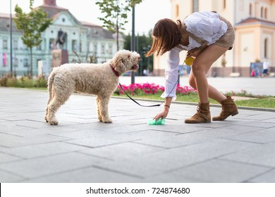 cleaning dogs excrement on street