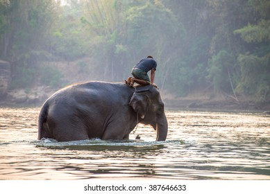 cleaning elephant in the river on the morning.