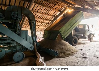 Cleaning of grain, hemp