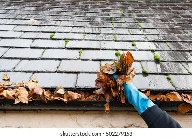 cleaning gutter clogged with leaves