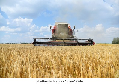 Cleaning of summer barley crop.Harvester working in the field.