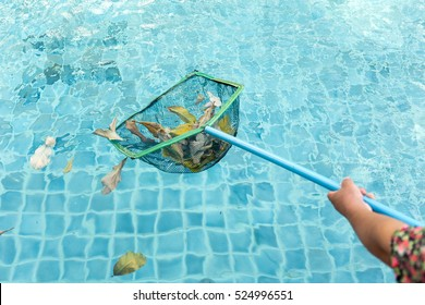 Cleaning swimming pool of fall leaves with cleaning net in the morning