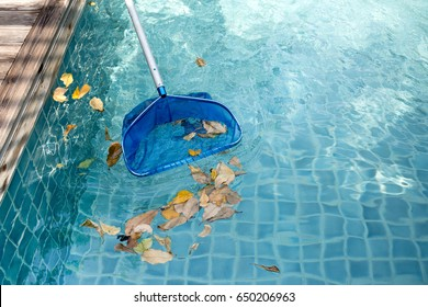 Cleaning swimming pool of fallen leaves with blue skimmer in summer time