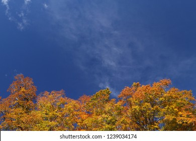 Clear autumn sky