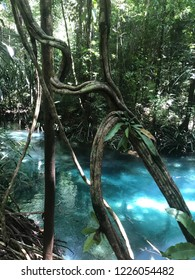 Clear blue cold water in Kali Biru river Raja Ampat West Papua Indonesia, surrounding by natural forest
