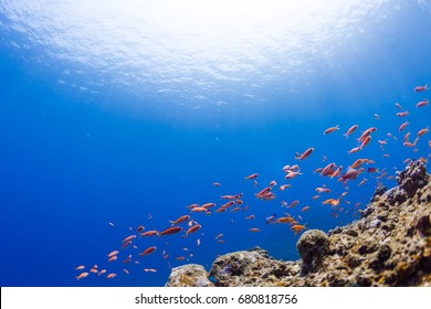 Clear Blue Sea and Red Fishes