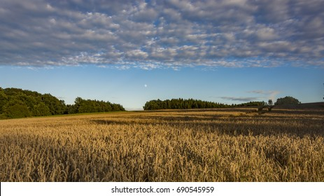Clear blue sky over the corn field, which is brighten by shaft from the sun. Sunny landscape with moon.