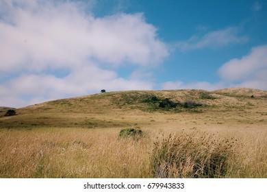 Clear Blue Sky over meadow