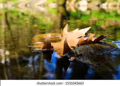 Clear Creek And Floating Leaves