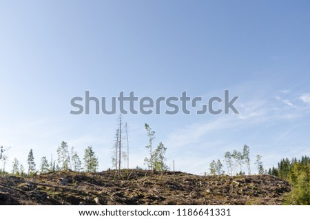 Clear cut forest area with some left still standing trees