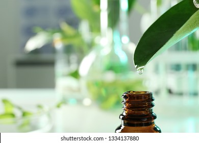 Clear drop falling from leaf into small bottle on blurred background, closeup with space for text. Plant chemistry