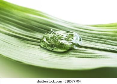 Clear gel on green leaf