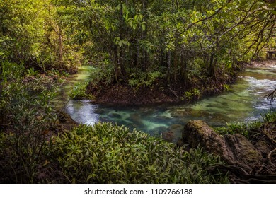 The clear green stream flows through the mangrove forest root. In the midst of the shady and beautiful nature. Close up. Tha Pom Klong Song Nam beautiful and famous tourist destination in Krabi, Thai