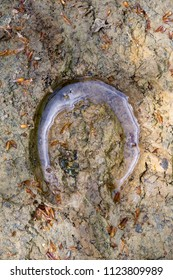 A clear horse hoof print in the mud, filled with water.
