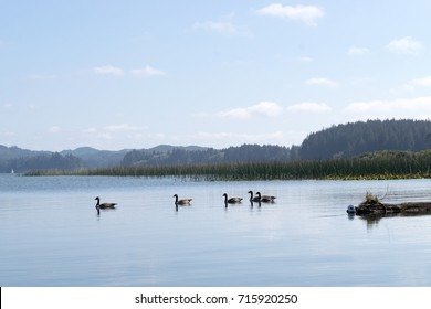 Clear Lake in Dune City with hills and geese