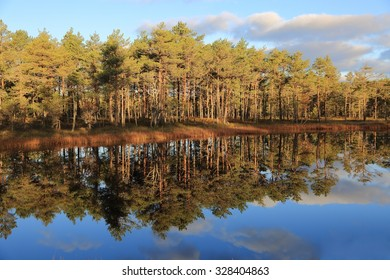 Clear reflections of pines in the water of bogs in Estonia