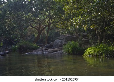 A clear river water and lush green wooded forest at Kavery Nisarga Dhama, Karnataka, India