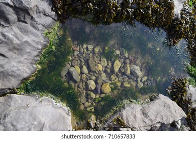 A clear rock pool, in South Wales, UK