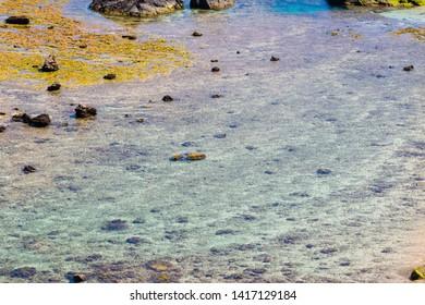 Clear sea and coral reefs of Amami Oshima, Kagoshima Prefecture, Japan