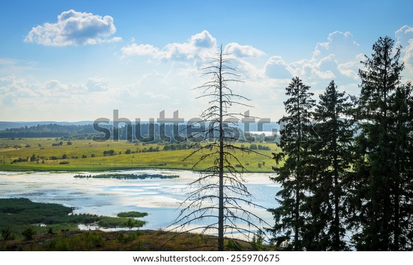 clear summer day over the river, forest and meadow