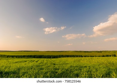 A clear, sunny day. Rural landscape with fields, green wheat. Horizontal frame. Photo taken in Ukraine, Kiev