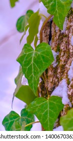 Clear Vertical Vibrant heart shaped vines and green algae thriving on the trunk of a tree