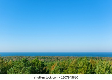 clear view of the green forest by the sea