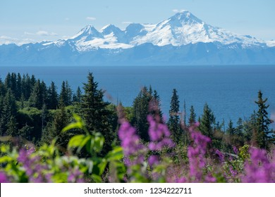 Clear view of Mount Redoubt from Anchor Point Alaska on a sunny day. Fireweed and trees in the foreground