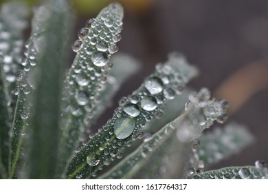 Clear water droplets on spikey green leaves.