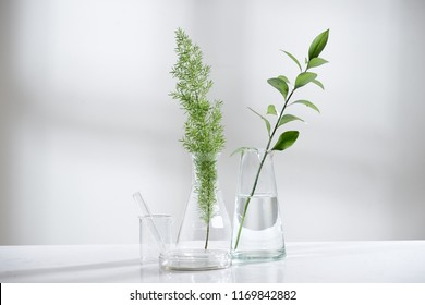 clear water in glass flask and vial with natural green leave in biotechnology science laboratory background