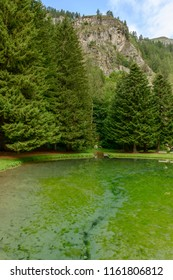 clear water of Gover mountain lake, among firs under steep cliffs , shot on a bright summer day at Gressoney Saint Jean,  Lys valley, Aosta, Italy