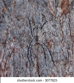 A clear, but well camoflagued wolf spider