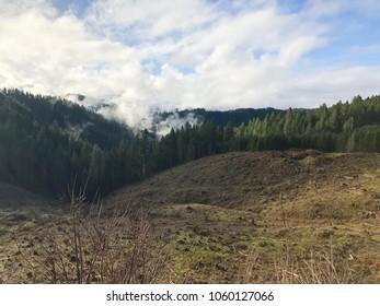Clearcut at Treefarm in Oregon